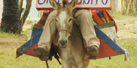 """Biblioburro"" - a donkey library - visits Colombian children"