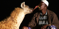 Finding a way to coexist with hyenas in Ethiopia